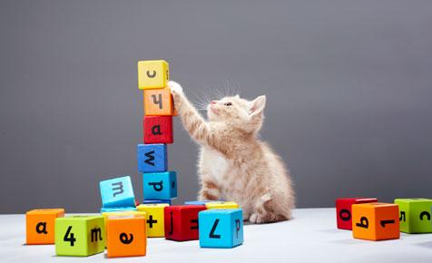 spelling-kitten